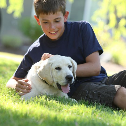 boy with dog on grass