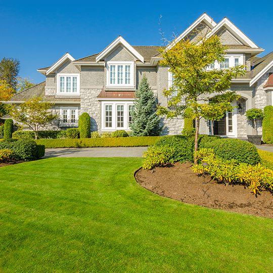 lawn, trees, & shrubs