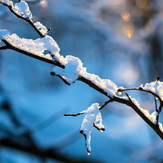 Protecting Trees and Shrubs in Winter