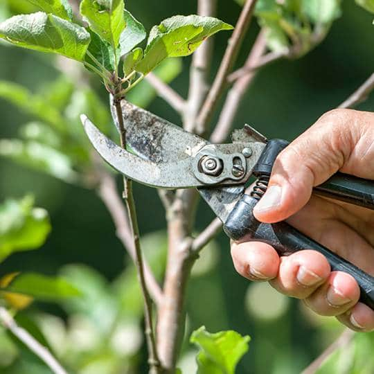Early Spring Lawn Care: Best Time of Year to Prune Your Trees