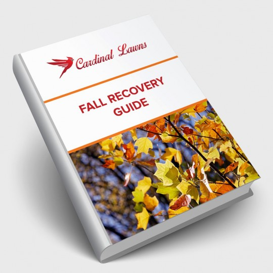 Fall Recovery Guide