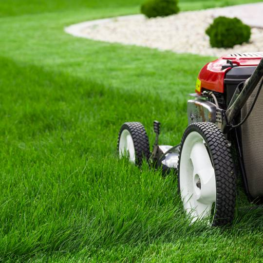 Because the top growth of grass is an indication of your lawn's root  system, cutting your grass directly ...