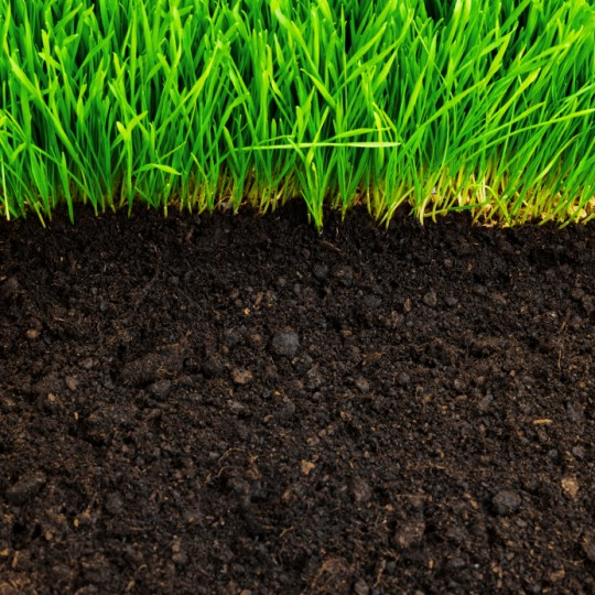 Soil Testing: Learn About Your Lawn