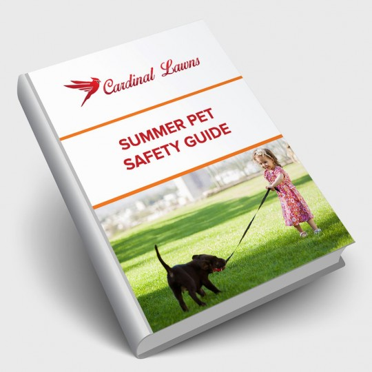 Summer Pet Safety Guide