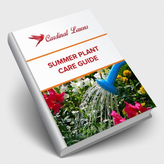Summer Plant Care Guide