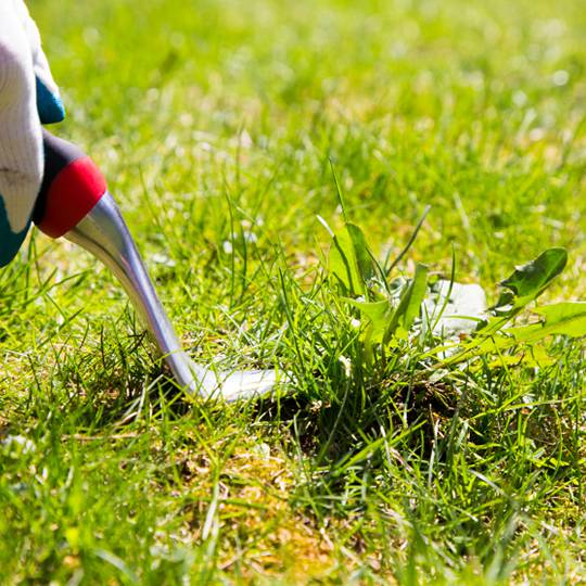 How to Remedy Lawn Weeds with Herbicides