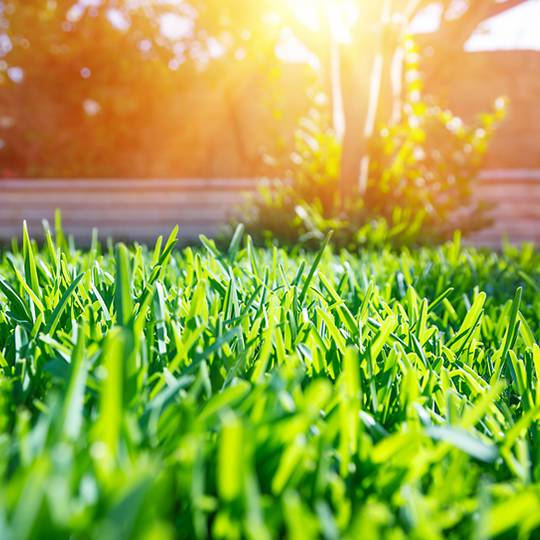 How to Control Pesky Summer Weeds