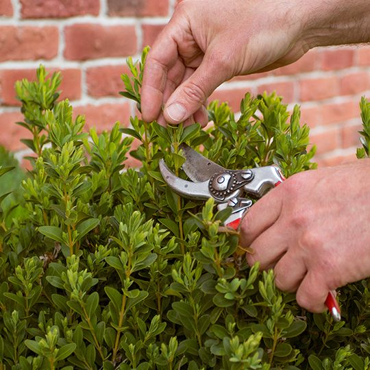 Three Things to Check When Inspecting Shrubs