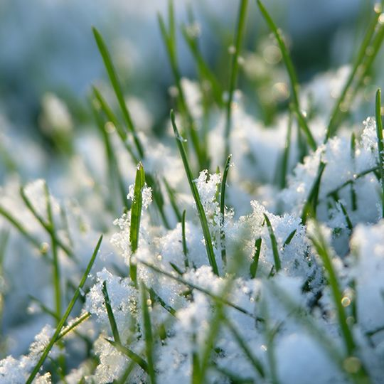 Winter Lawn Care: What To Do and What Not to Do