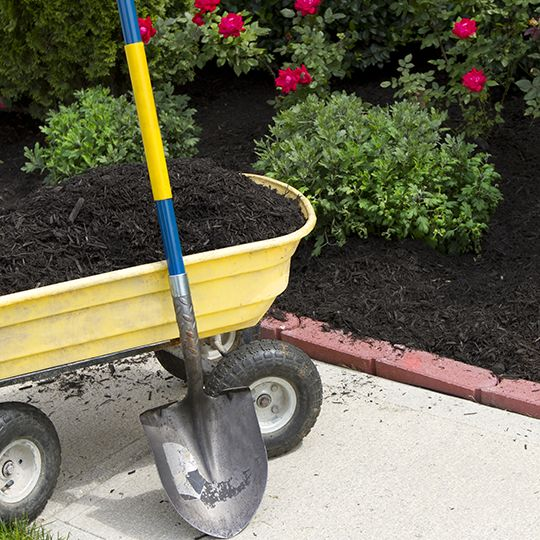 Five Lawn Mulching Tips
