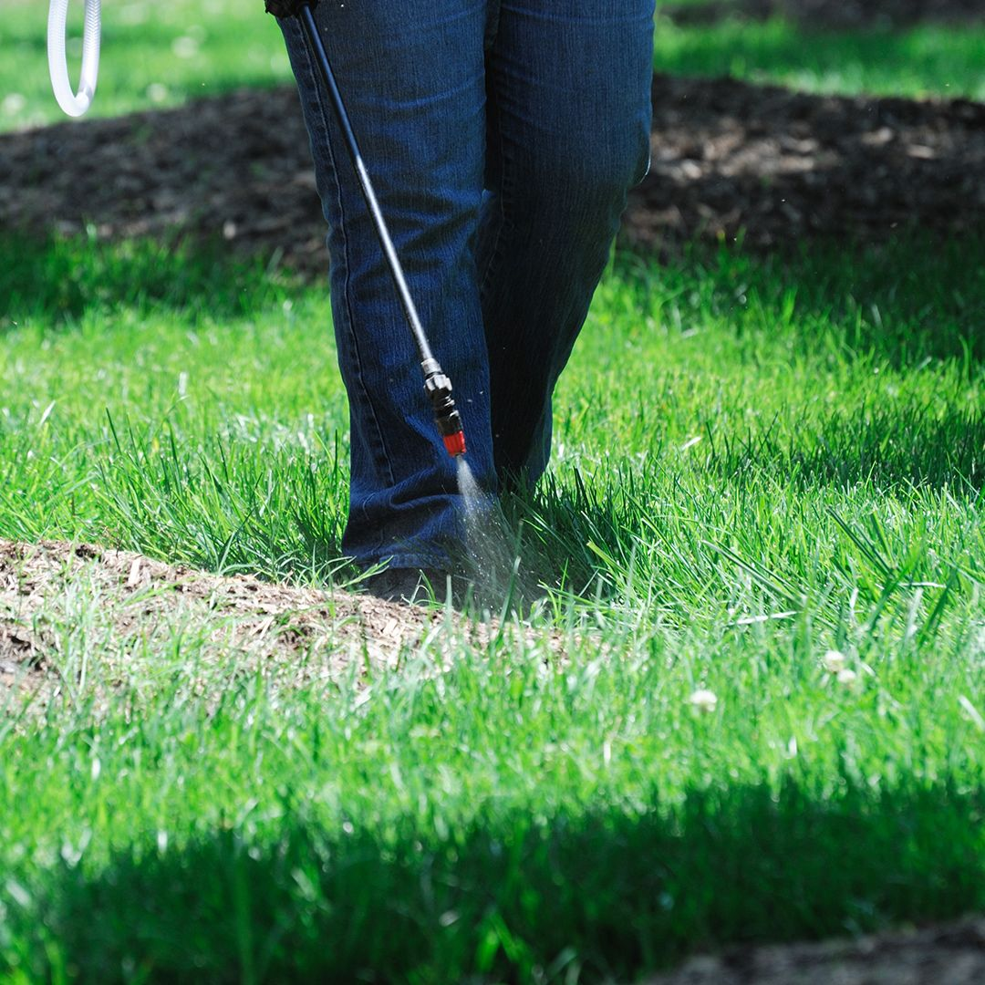 How To Kill Weeds With Herbicides