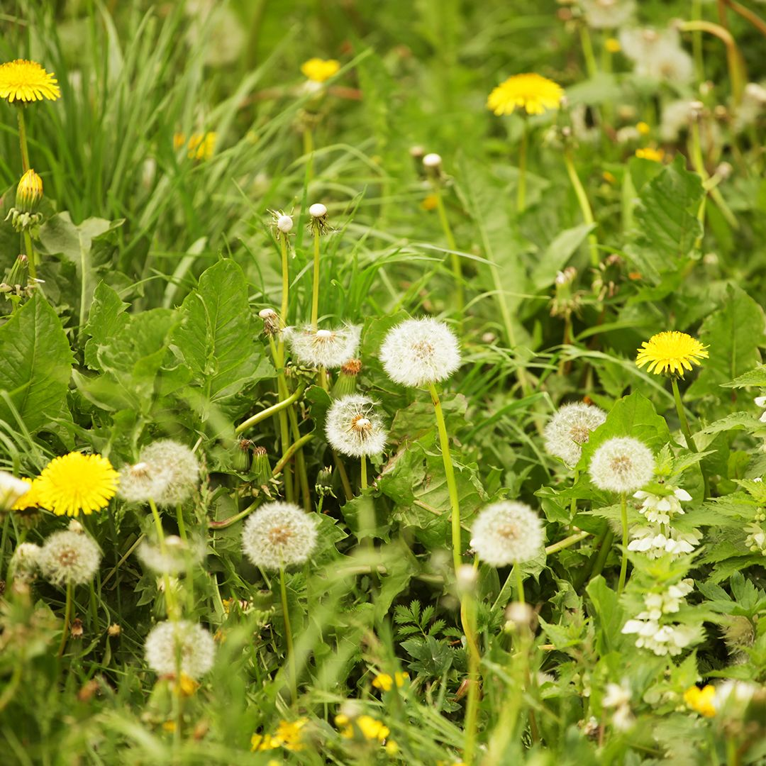 How to Control Summer Weeds | Cardinal Lawns