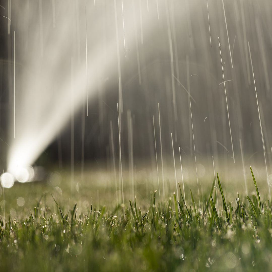 When To Water Your Lawn Cardinal Lawns
