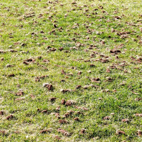 Aerating Lawns in Winter