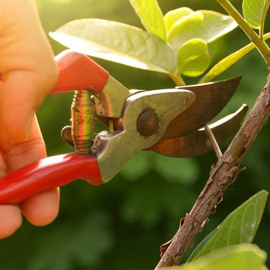 pruning-tools