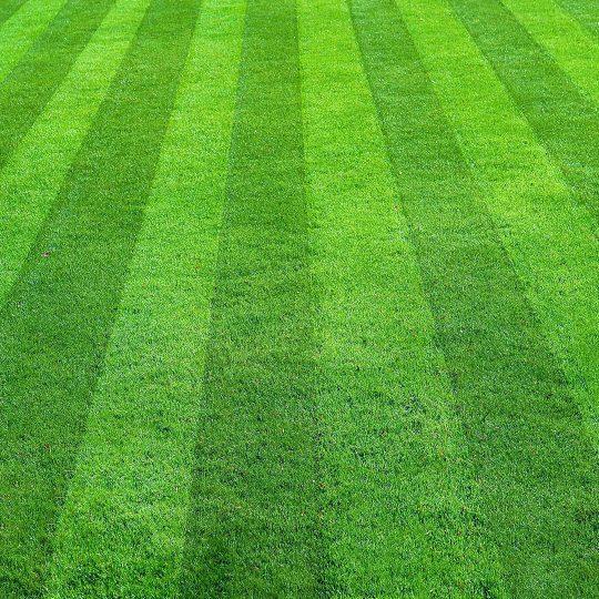 Best Lawn Mowing Patterns Cardinal Lawns