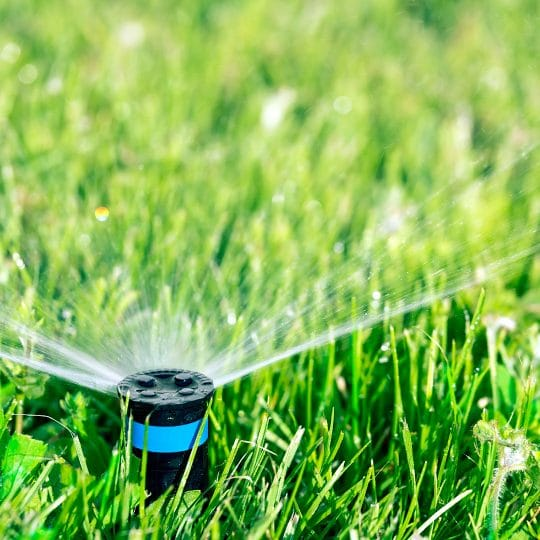 When to Water the Lawn