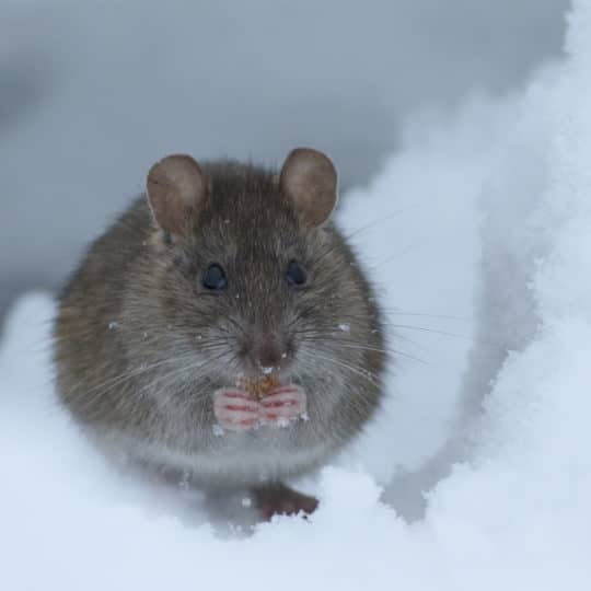 Winter Pest Control Tips