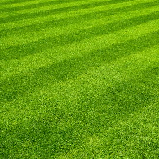 mowed-lawn