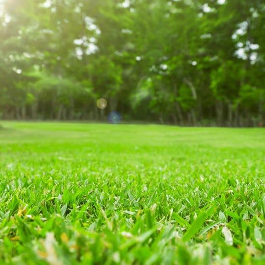 Landscaper Lawn Tips