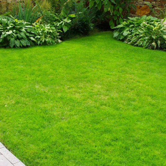 Healthy Lawn Tips