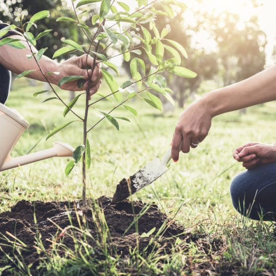 New Tree Planting Guide
