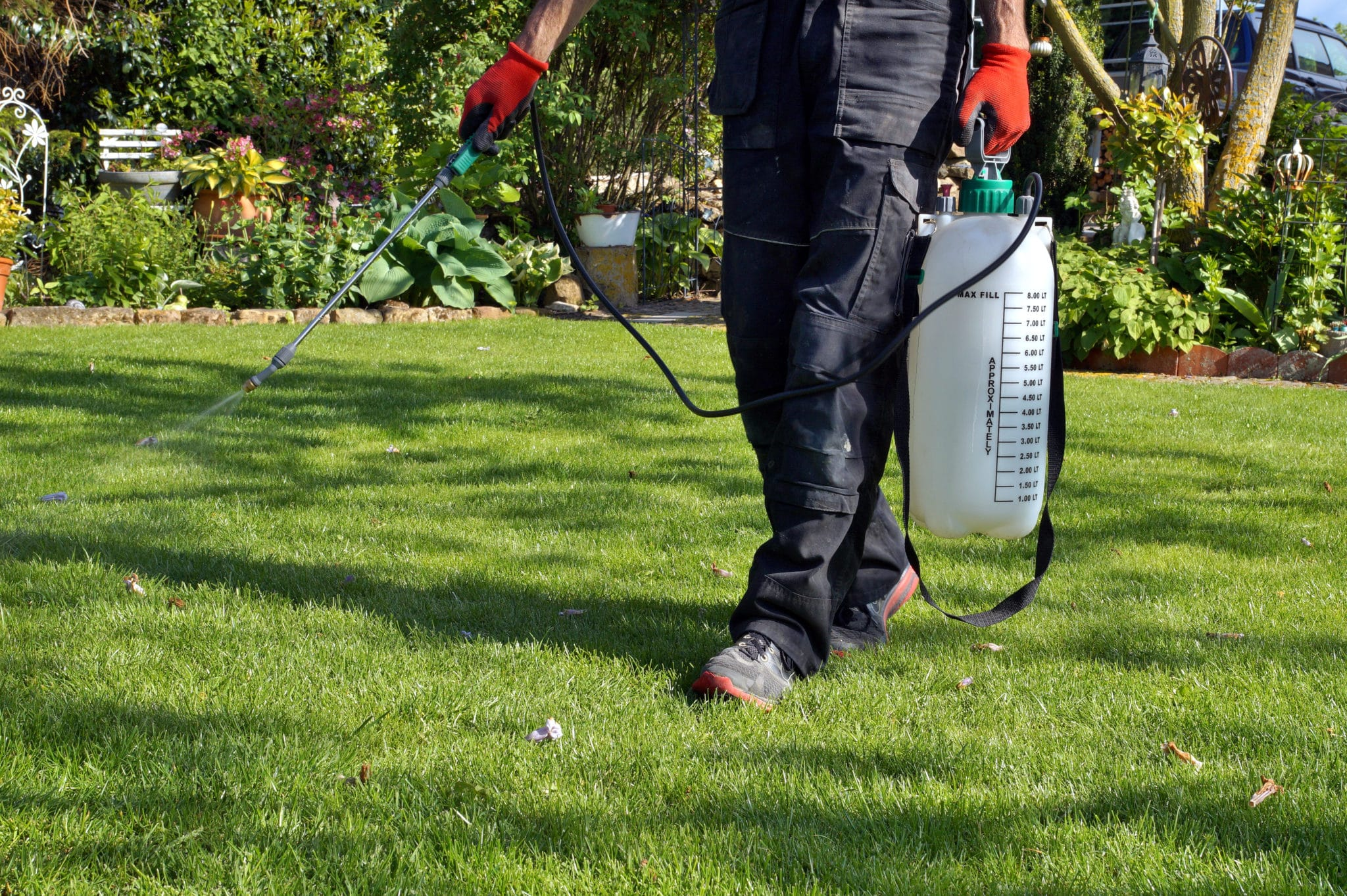 Pre Emergent Weed Control Cardinal Lawns