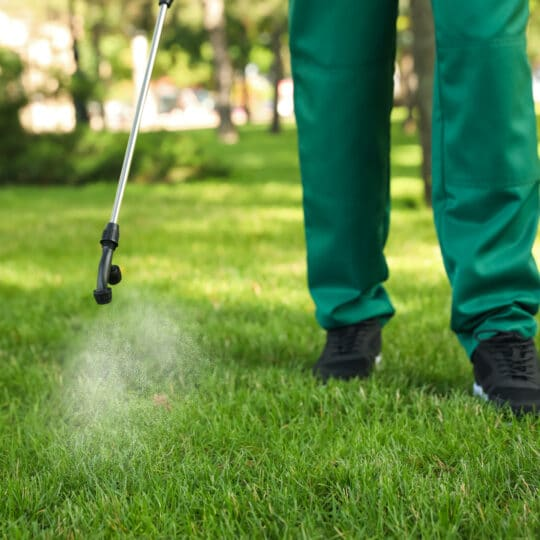Common Fall Lawn Pests