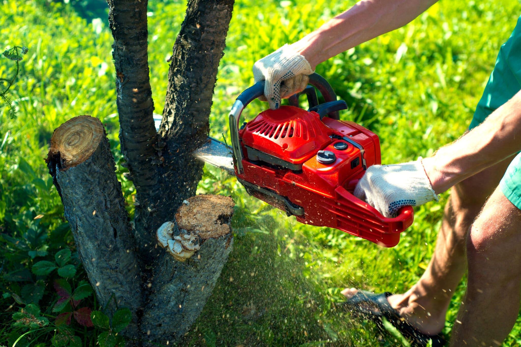 Tree Removal Procesns