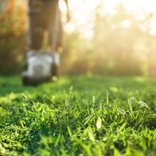 Summer Lawn Maintenance Checklist