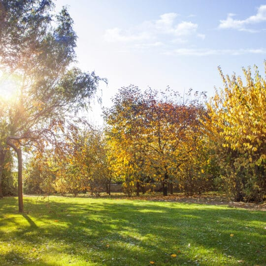 Fall Lawn Clean Up Tips